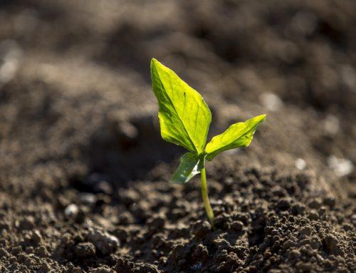 Substráty – pro krásu rostlin a bohatou úrodu