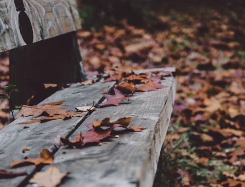 Listopad v zahradě