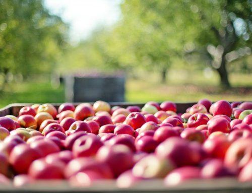 Ovocné stromky (výběr, sázení a péče)