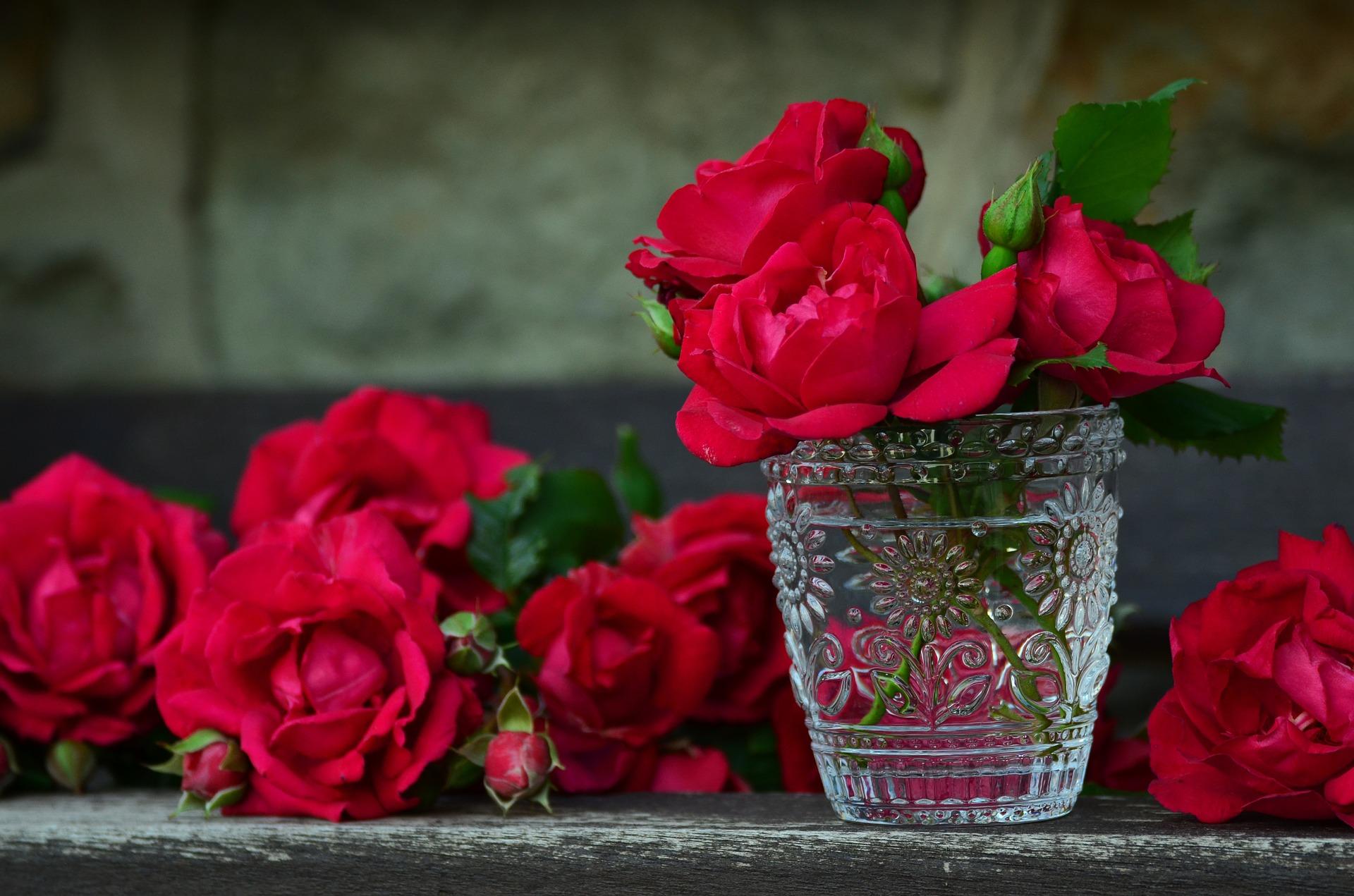 jak se starat o růže